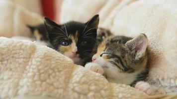 lindos gatitos jóvenes en casa