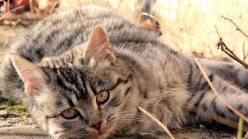 Funny kitten