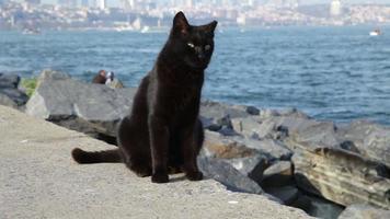 gatos à beira-mar do bósforo. Istambul