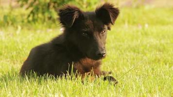 chien sans-abri assis dans l'herbe