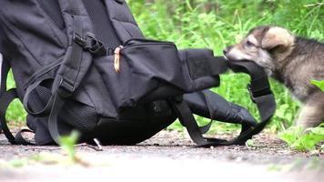 Welpe und Rucksack