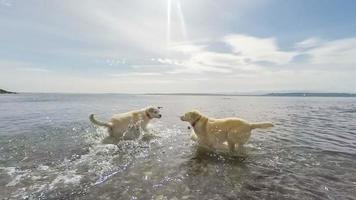cães socializando na praia