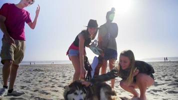 amigos jugando con perro en la playa video