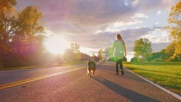 Walking with a dog in the sunset. Young woman is on the leash Australian shepherd dog against a beautiful sky on a clear autumn day. Steadicam slow motion shot