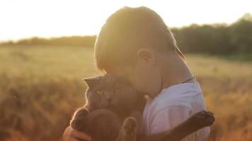 Boy with a British cat at sunset in cornfield video