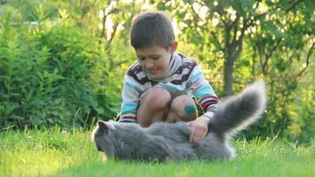 niño jugando con un gato británico en la hierba