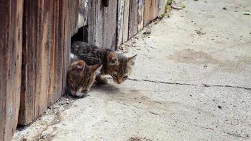 Two kitten eat outside video