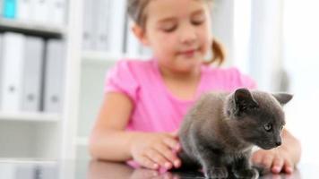 niña acariciando un gatito gris