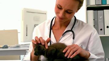 veterinario esaminando un gattino grigio nel suo ufficio