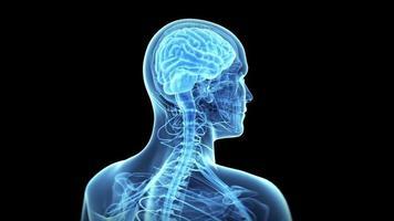 cérebro e nervos