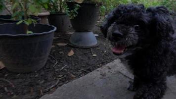 cane che corre, rallentatore video