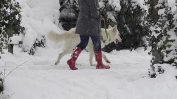 câmera lenta: mulher com botas vermelhas passeando com o cachorro video