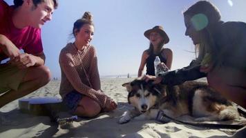 gli amici si siedono intorno al cane sulla spiaggia