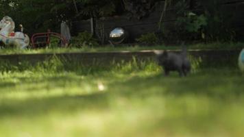 chat chaton mignon dans l'herbe