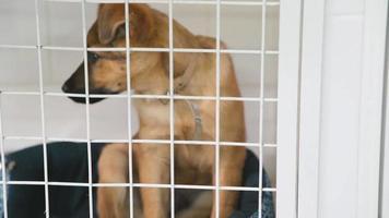 chiot dans une cage. Petit chien dans une clinique vétérinaire seul assis