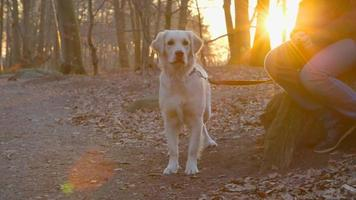 melhores amigos - adolescente e seu cachorro