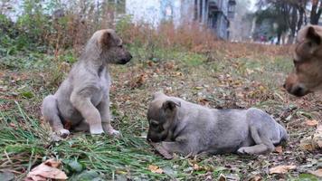 cachorros sem-teto na rua