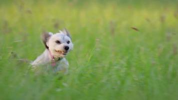 Dog runs through the park