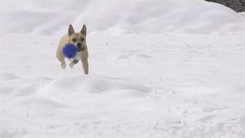 slow motion: hond in de winter