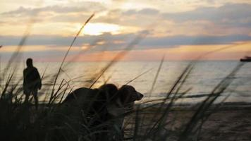 Girl hug dog on sand beach. Silhouette of man playing frisbee. Summer evening video