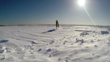 Images au ralenti: chiot beagle drôle se heurte à la caméra