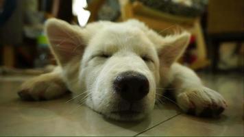 perrito durmiendo en el suelo