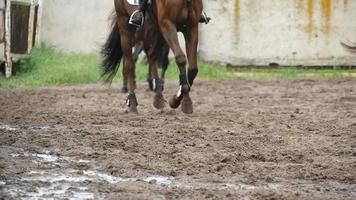 voeten van paarden rennen op modder. slow motion video