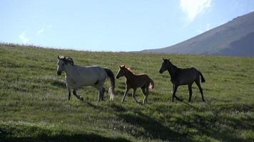 Pferde überspringen den Hügel