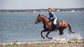 Don caballo ruso rápido galopando sobre el agua