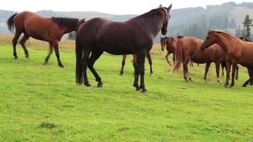 Beautiful horses on green meadow