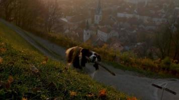 perro corriendo colina arriba con una ciudad en backgroung en cámara lenta