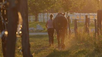 SLOW MOTION: Young woman leading a horse from to meadow field in sunny morning