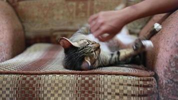 strofinare a mano il collo di un gatto o giocare sul divano