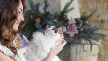 menina bonita segurando um gato gordo e acariciá-lo. lentamente