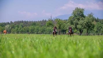 Reitpferde auf grünem Rasen