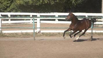 tanzendes Pferd im Sand