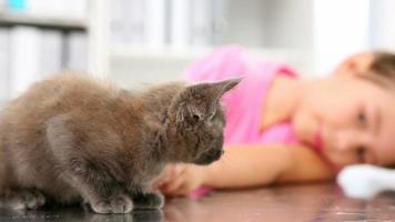 niña jugando con un gatito gris