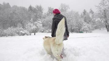 câmera lenta: cão pastor suíço branco recebendo uma recompensa video