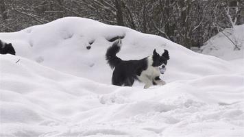 Zeitlupe: Hund mit Ball video