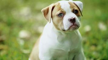 entzückender Hund mit schönen grünen Augen, die im grünen Gras sitzen