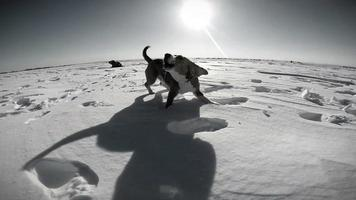 filmagem em preto e branco: cachorro alegre corre pelo campo nevado e late