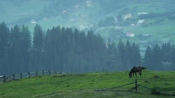 cavalo pastando no prado da montanha