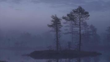 sumpmark - moorlandschaft - sonnenaufgang