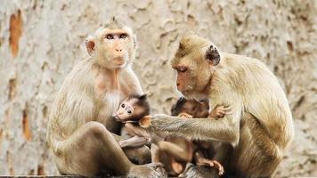 familia mono video