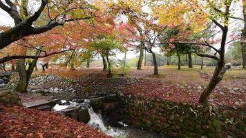 Herbst im Nara Park, Japan. video
