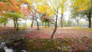 otoño en el parque de nara, japón.