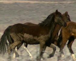 wilde Pferde 30 video