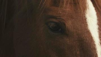 Close-up of horse head video