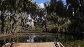 paludi della Louisiana