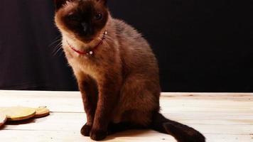 siamese katten levensduur